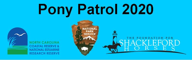 "Love Our NC Wild Horses? Volunteer For ""Pony Patrol"""
