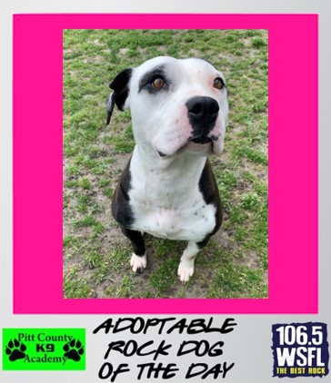 Rock Dog of the Day 4-5-21********ADOPTED*********