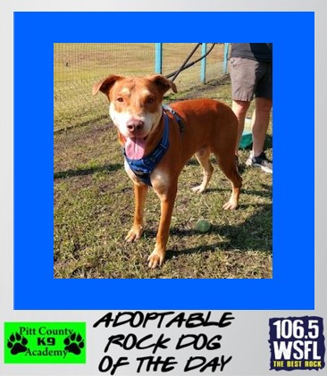 ***ADOPTED***Rock Dog of the Day 4-6-21