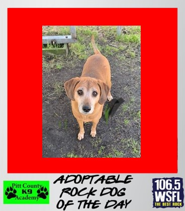 ***ADOPTED***Rock Dog of the Day 4-21-21