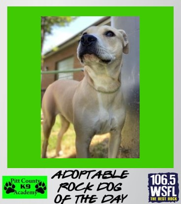 ***ADOPTED***Rock Dog of the Day 4-26-21