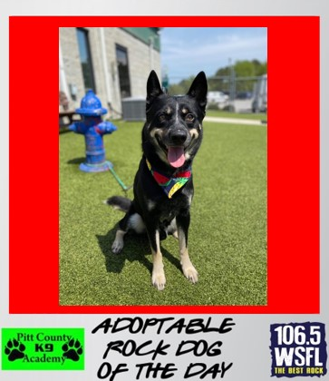 ***ADOPTED***Rock Dog of the Day 4-27-21