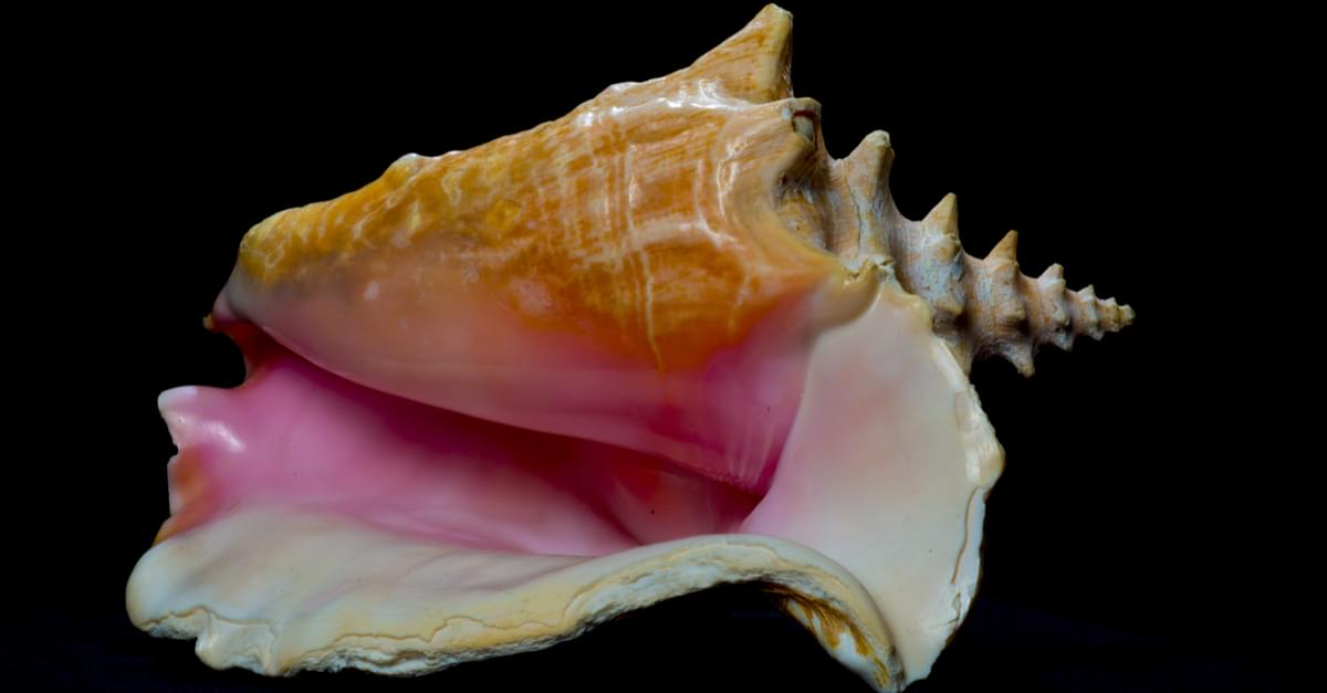 Woman Jailed for Collecting Shells