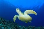 Aquarium Cares For Animals Caught In The Cold