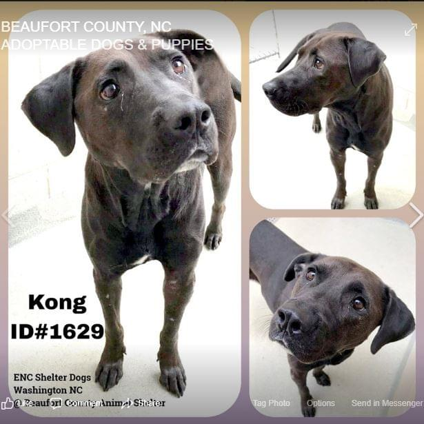 Funky Friday Dog of the Week: Kong