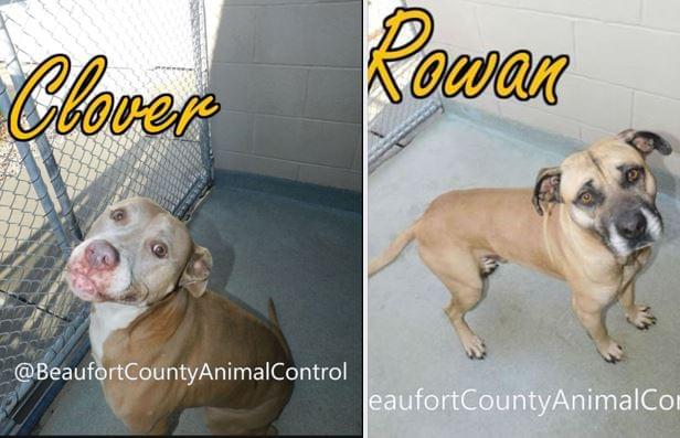 Funky Friday Dogs of the Week: Clover & Rowan
