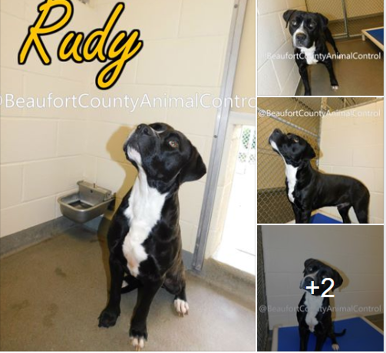 Funky Friday Dogs of the Week: Rudy