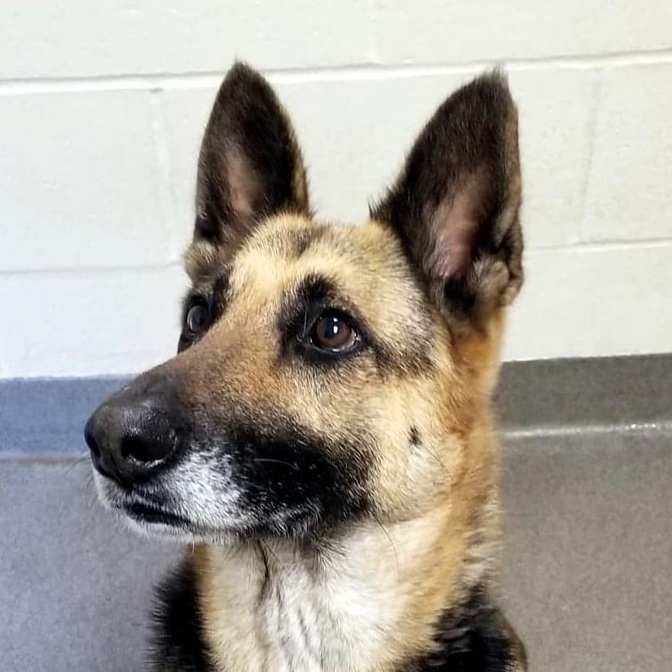 Funky Friday Dog of the Week: Lola