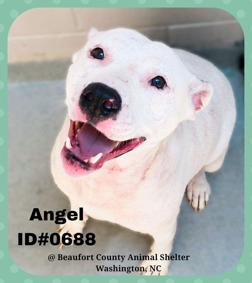 Funky Friday Dogs of the Week: Angel