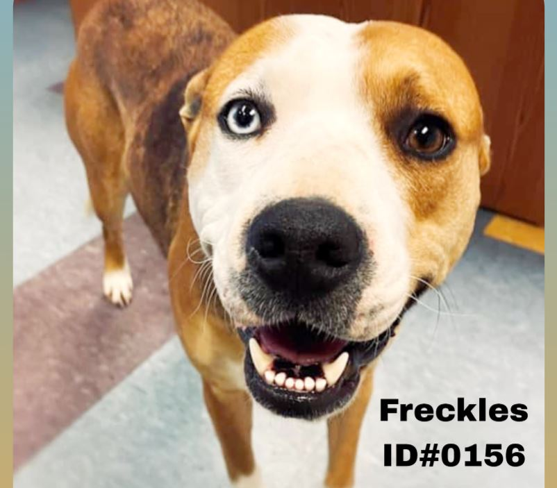 Funky Friday Dogs of the Week: Freckles