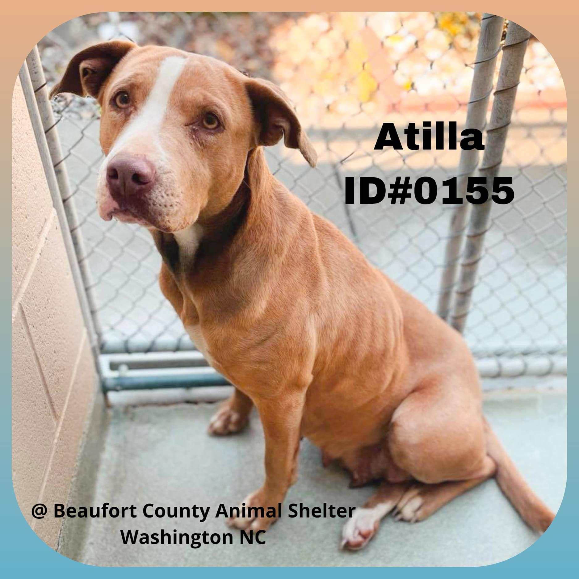 Funky Friday Dogs of the Week: Atilla