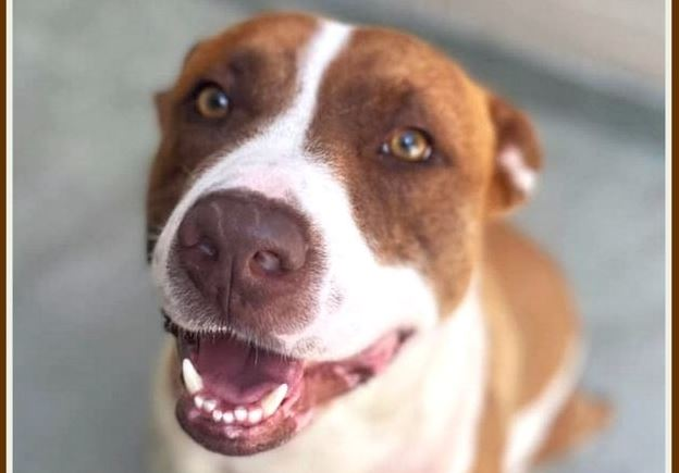 Funky Friday Dogs of the Week: Major