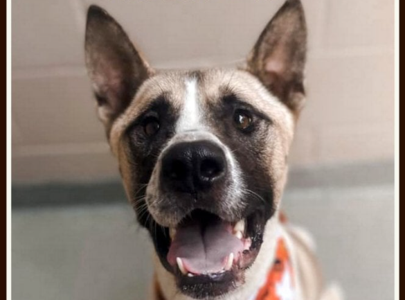 Funky Friday Dog of the Week: Ace