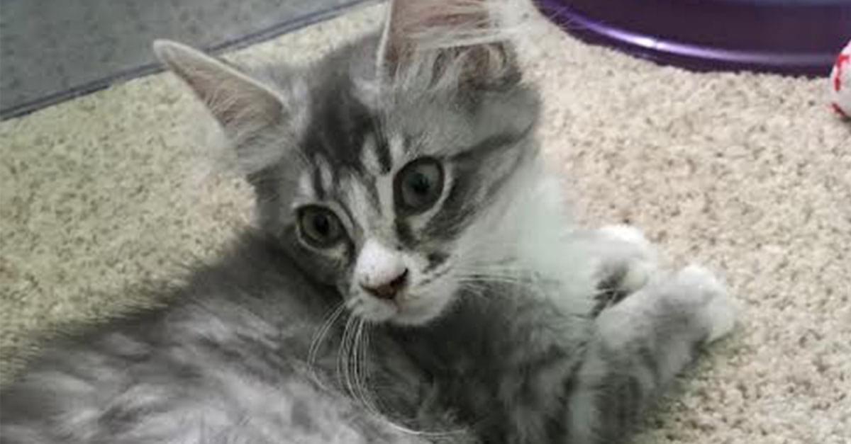 Meet Wheless' New Cat!
