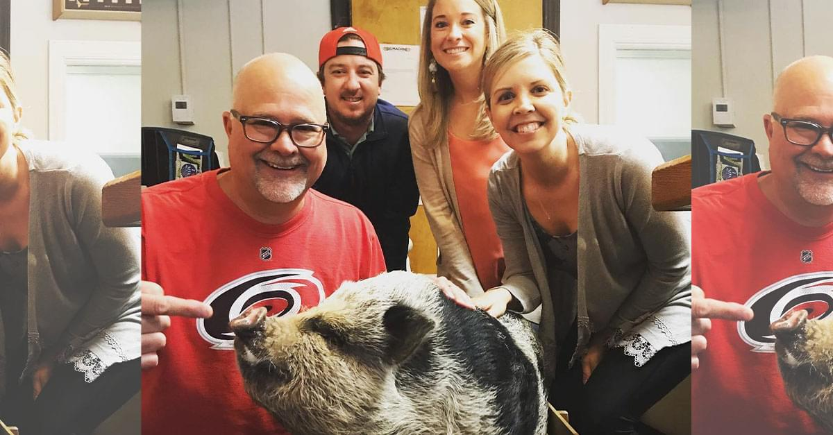 Watch: Q Morning Crew Meets Hamilton the Pig