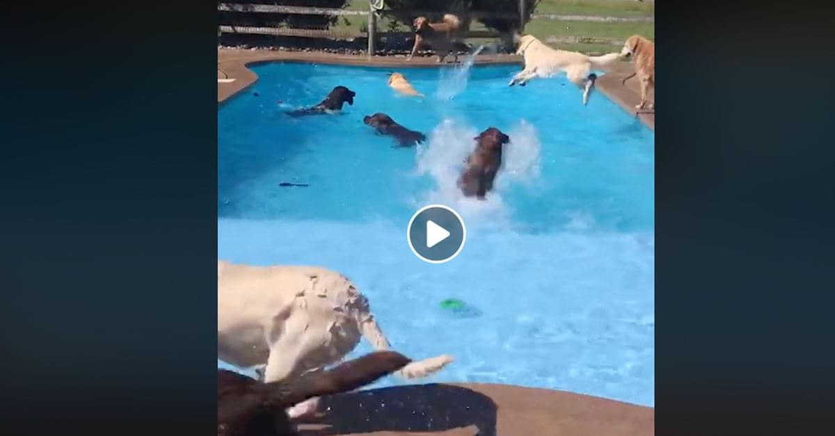 Watch these Dogs Have the Best Pool Party