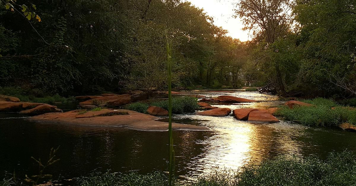High Levels of Fecal Bacteria in Neuse River