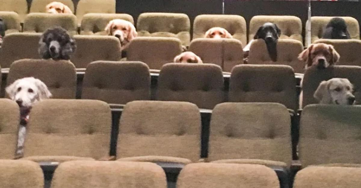 So Cute! Service Dogs Attend Theatre Performance For Training