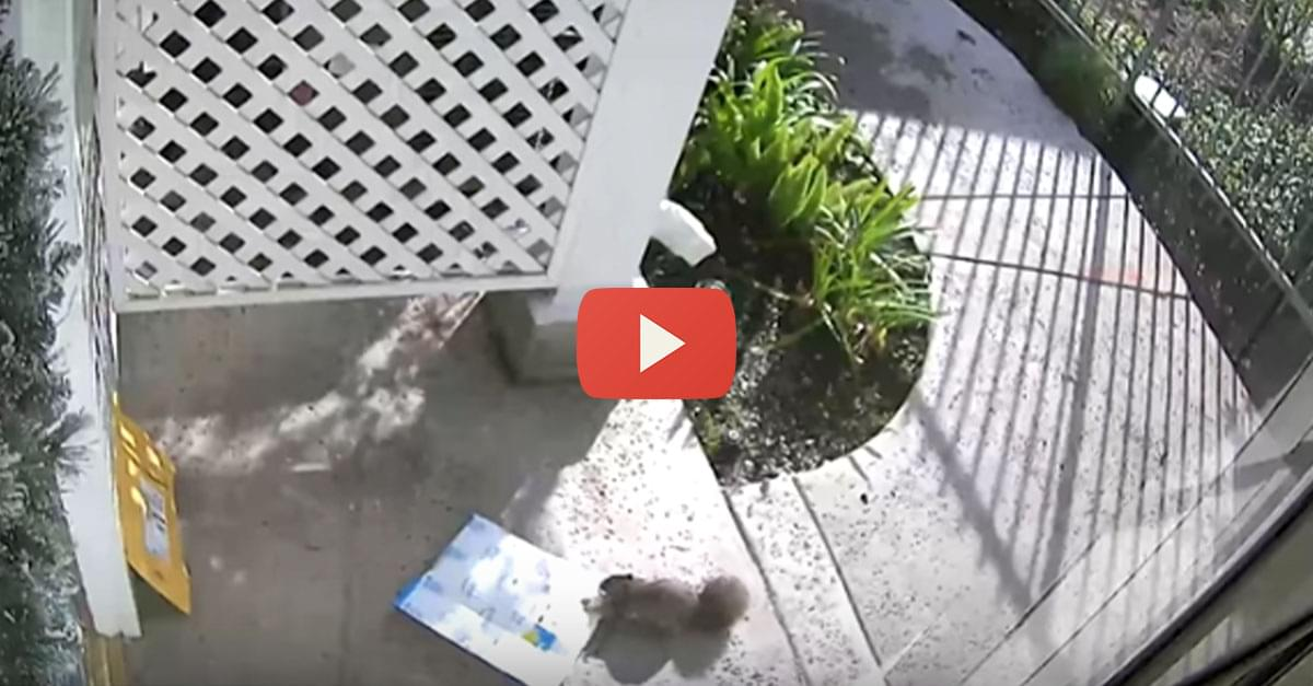 Watch: Squirrel Steals Package from Front Porch