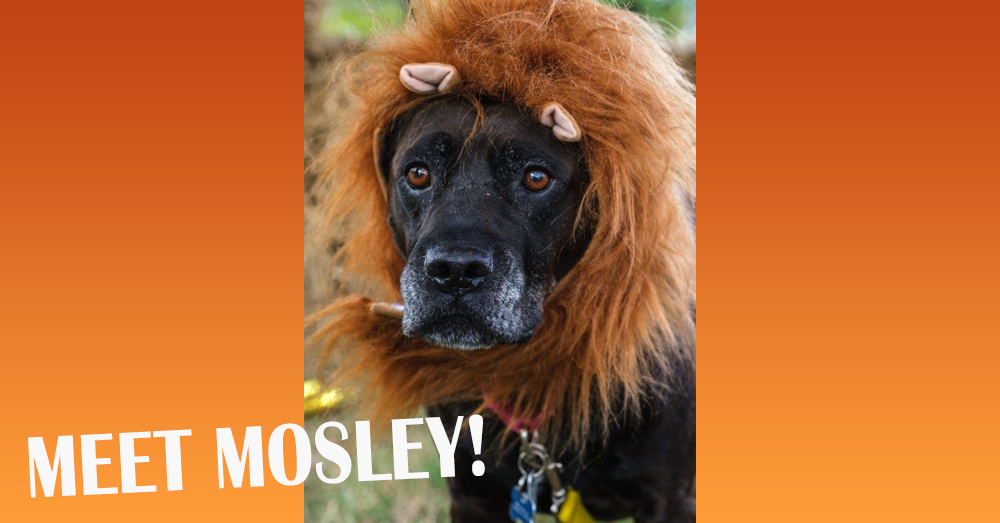 Fursday- Meet Mosley