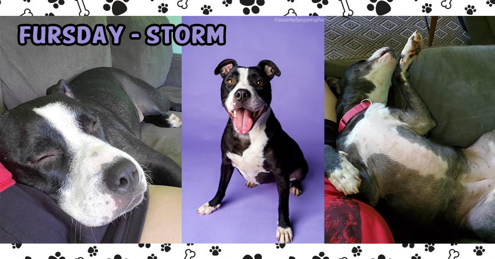 Fursdays-PupBG-Storm1