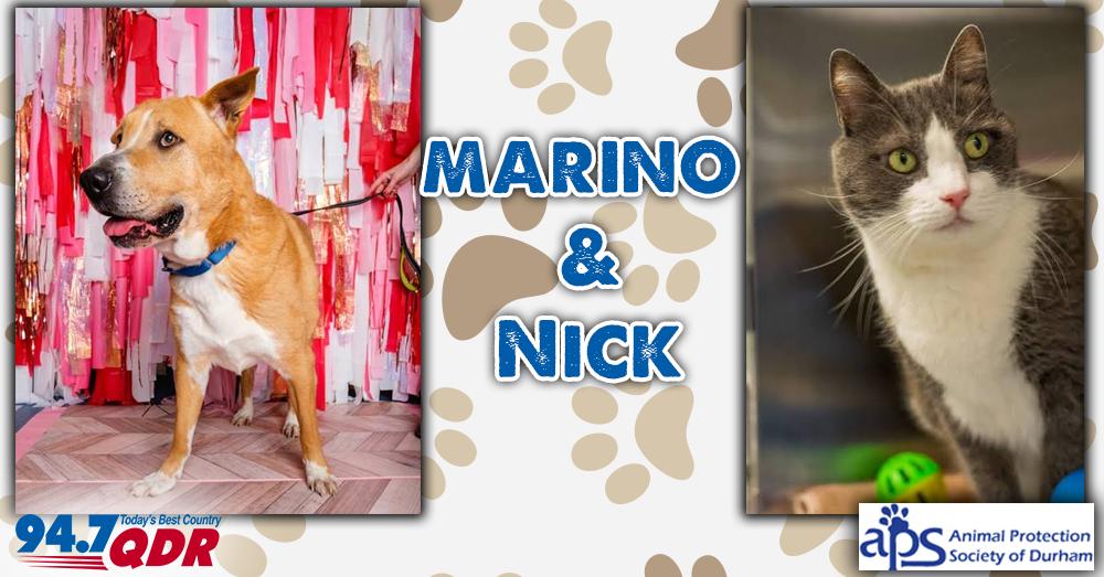 Fursday: Marino and Nick