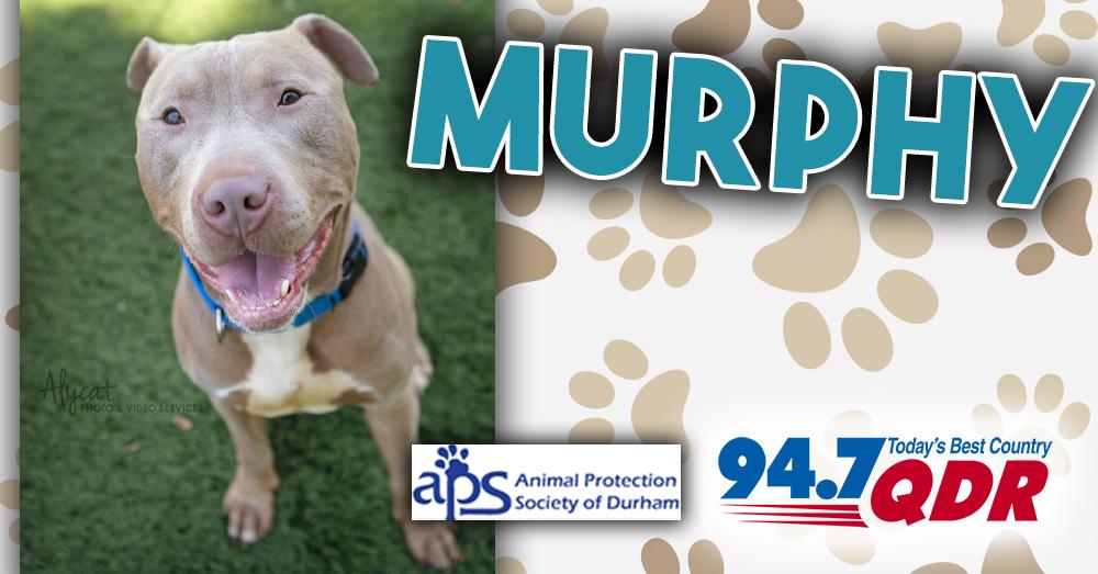 Fursday: Murphy