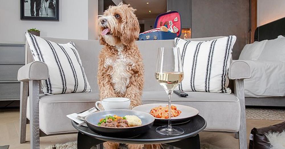 Hilton unveils new dog menu across 32 of its hotels