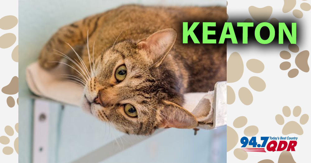 Meet Keaton From The Animal Protection Society of Durham