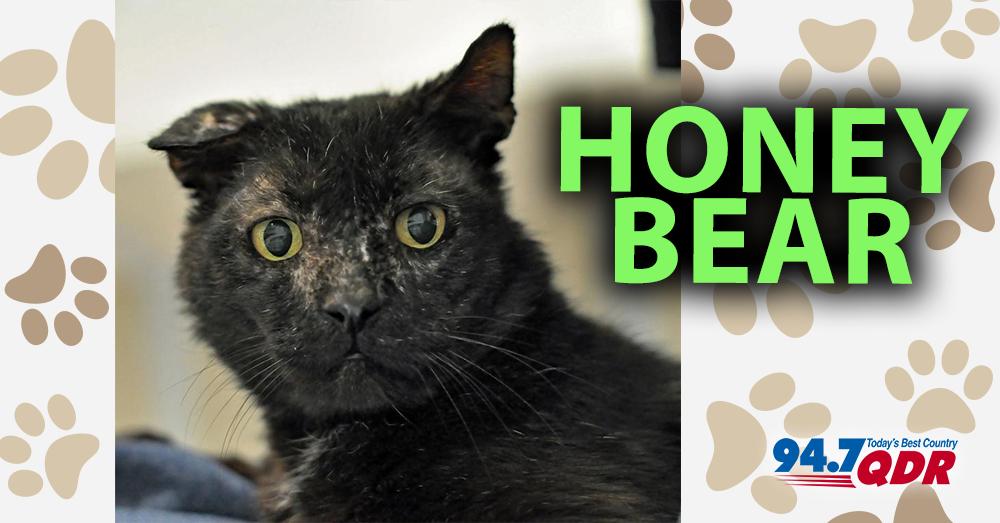 Fursday- Meet Honey Bear From Second Chance Pet Adoption