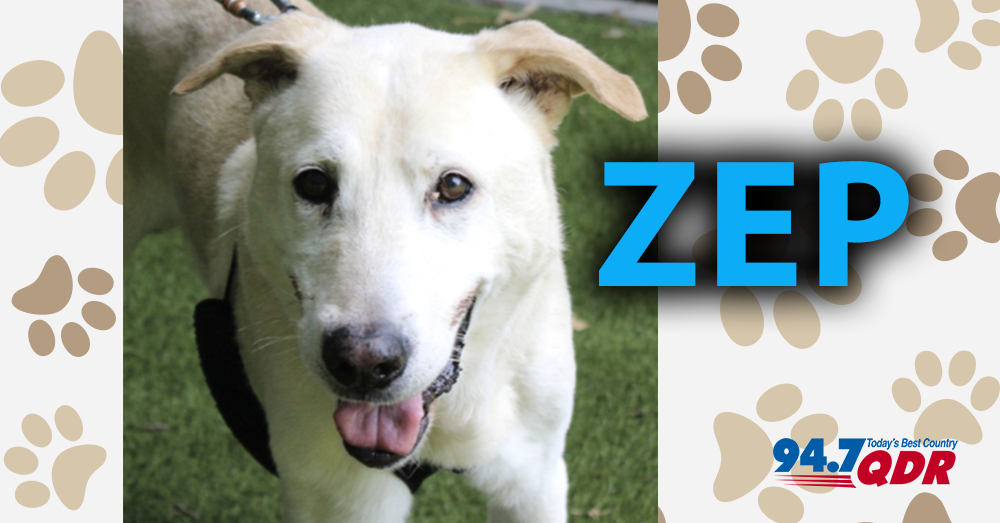 Meet Zep From The Wake County Animal Center