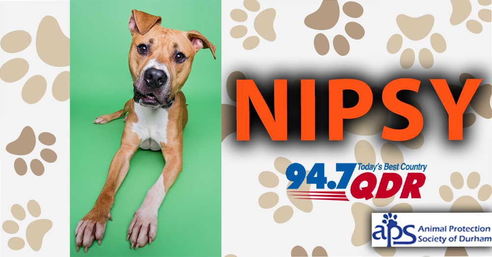 Meet Nipsy From The Animal Protection Society of Durham