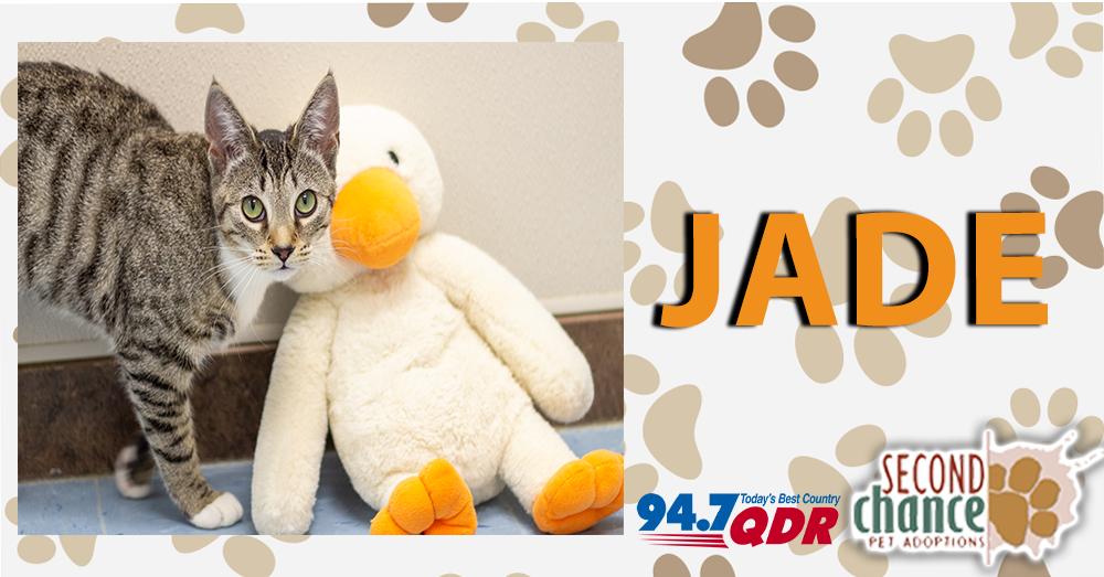 QDR Fursdays: Meet Jade from Second Chance Pet Adoptions