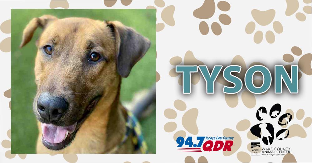 QDR Fursdays: Meet Tyson