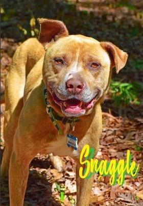PET OF THE WEEK: Snaggle