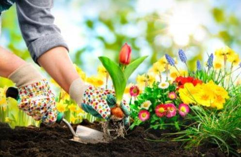 Gardenside Chats With Extension Master Gardeners Begin This Week