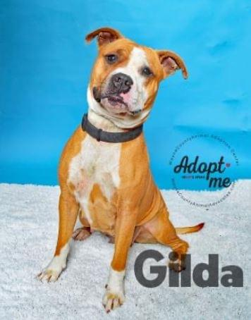 PET OF THE WEEK: Gilda