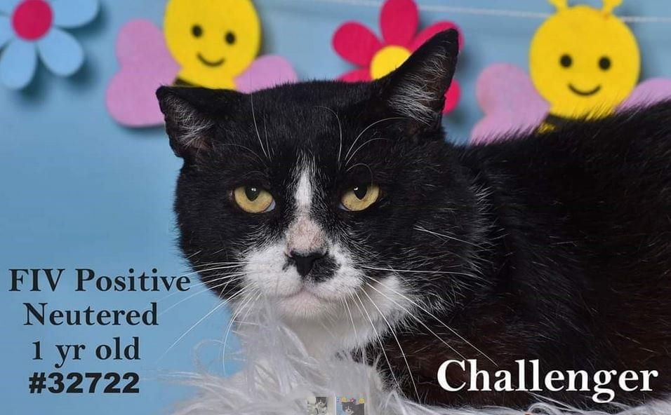 PET OF THE WEEK: Challenger