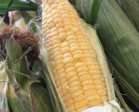 Sweet Corn Season Will Be Here Soon!