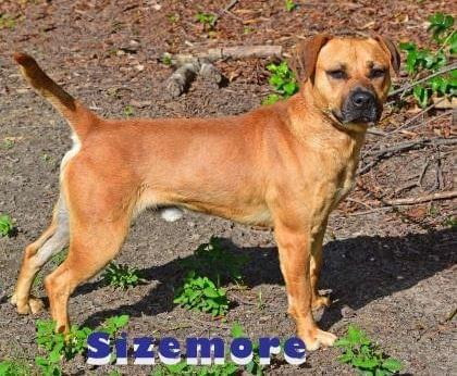 PET OF THE WEEK: Sizemore