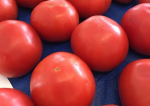 It Is The Season For Tomatoes