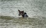 Hurricane StormCenter: Pets
