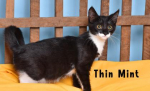 PET OF THE WEEK: Thin Mint