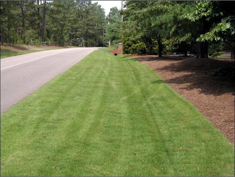 Think Twice Before Fertilizing Your Lawn This Fall