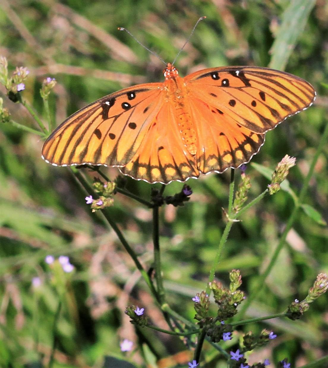 PIC OF THE DAY: Resting Butterfly
