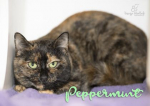 PET OF THE WEEK: Peppermint Powered By Jackson & Sons