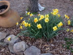 Plant Bulbs This Fall For Spring Flowers
