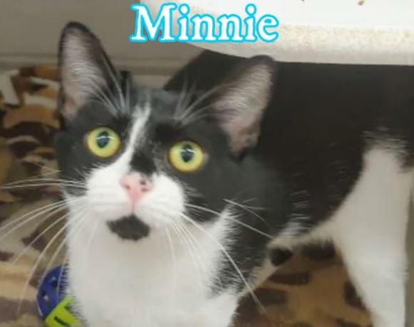PET OF THE WEEK: Minnie Powered By Jackson & Sons