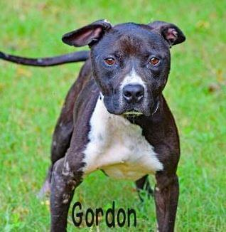 PET OF THE WEEK: Gordon Powered By Jackson & Sons