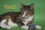 PET OF THE WEEK: Fauci Powered By Jackson & Sons